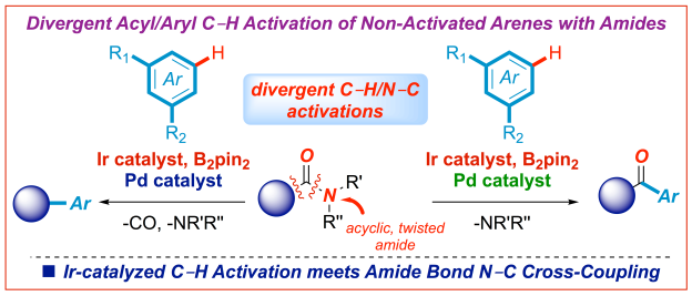 Iridium C-H activation and amide bond cross-coupling