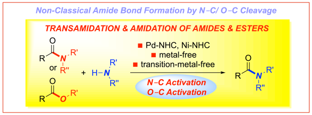 Non-classical amide bond formation by amide ester activation