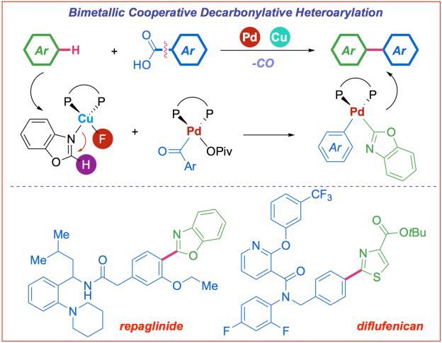Bimetallic decarbonylative heteroarylation of carboxylic acids